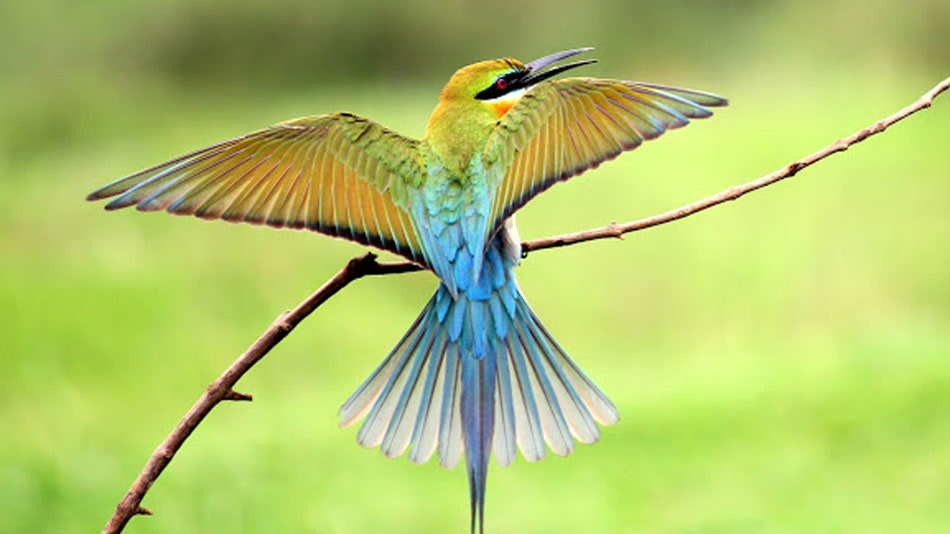 Top 10 Most Beautiful Migratory Birds